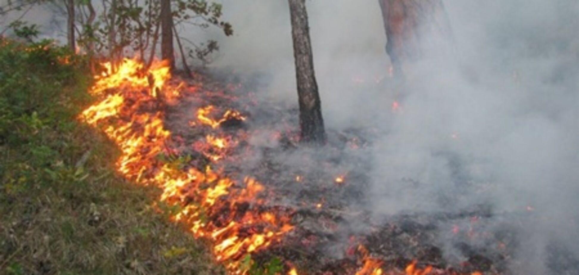 Лісова пожежа біля Ялти локалізована