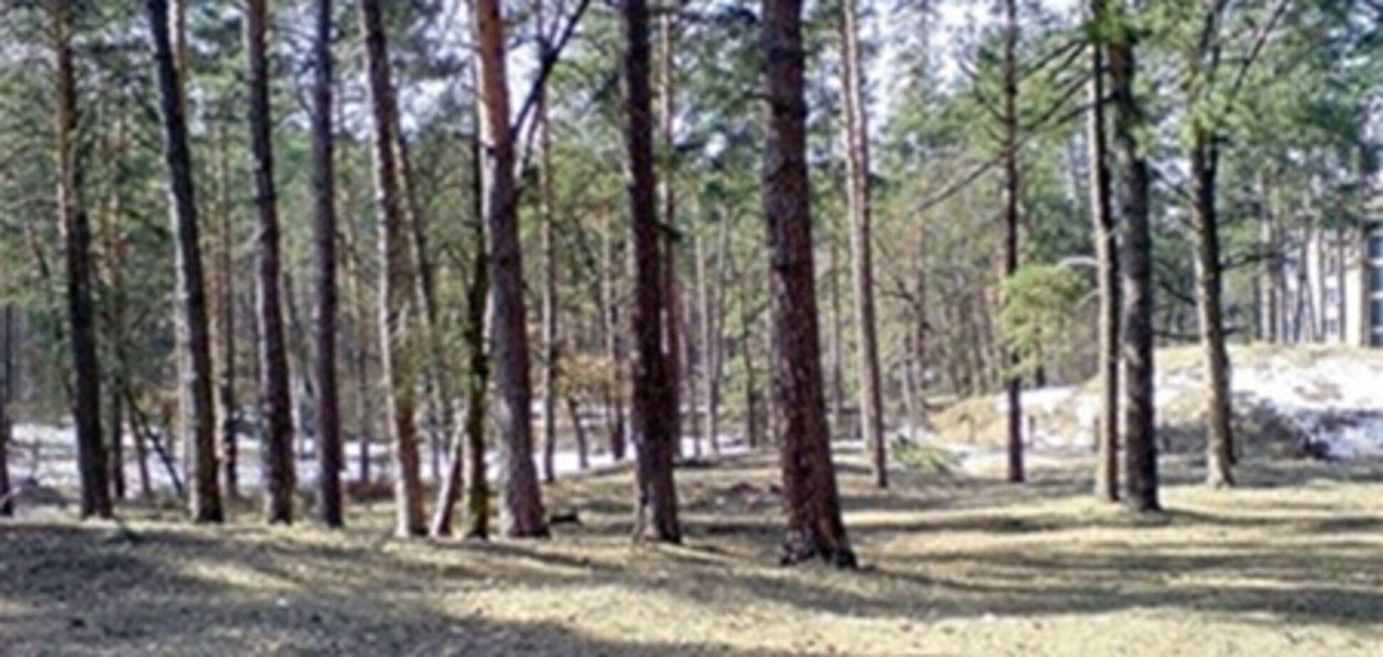 Прокуратура Киева остановила незаконную вырубку леса