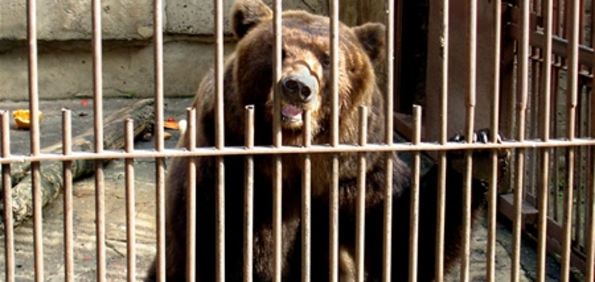 Медведь отгрыз ногу служителю зоопарка в Виннице