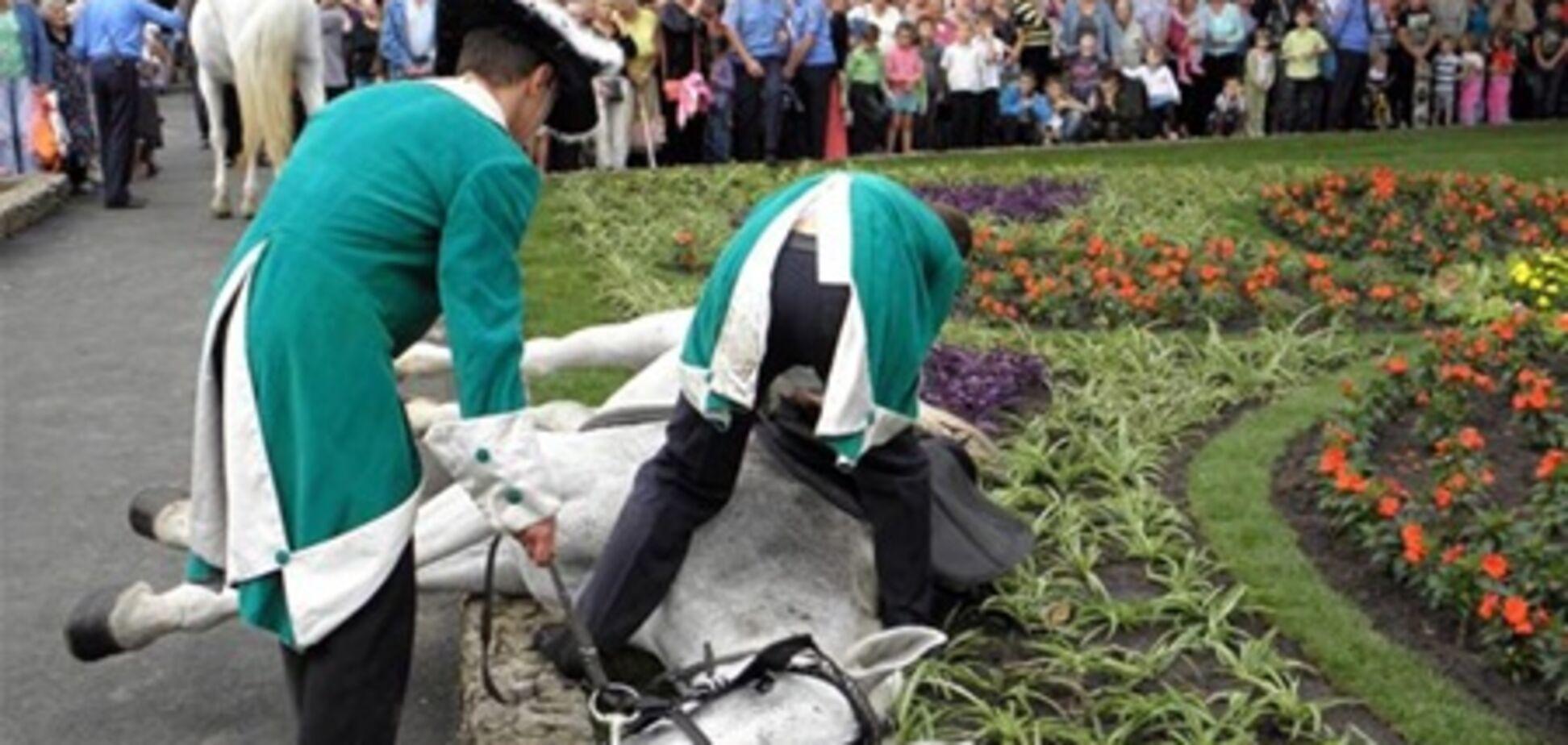 В Одессе на открытии памятника Суворову лошадь упала от голода