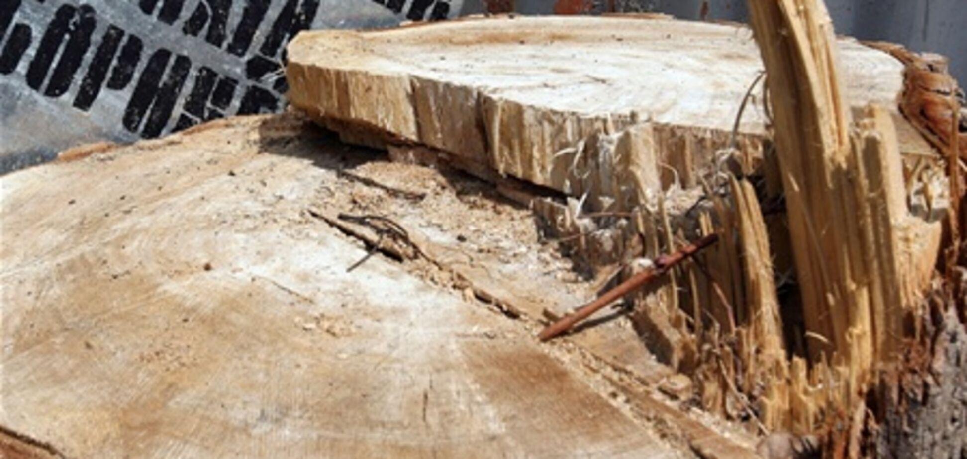 На Печерске самовольно вырубили деревья: прокуратура возбудила дело