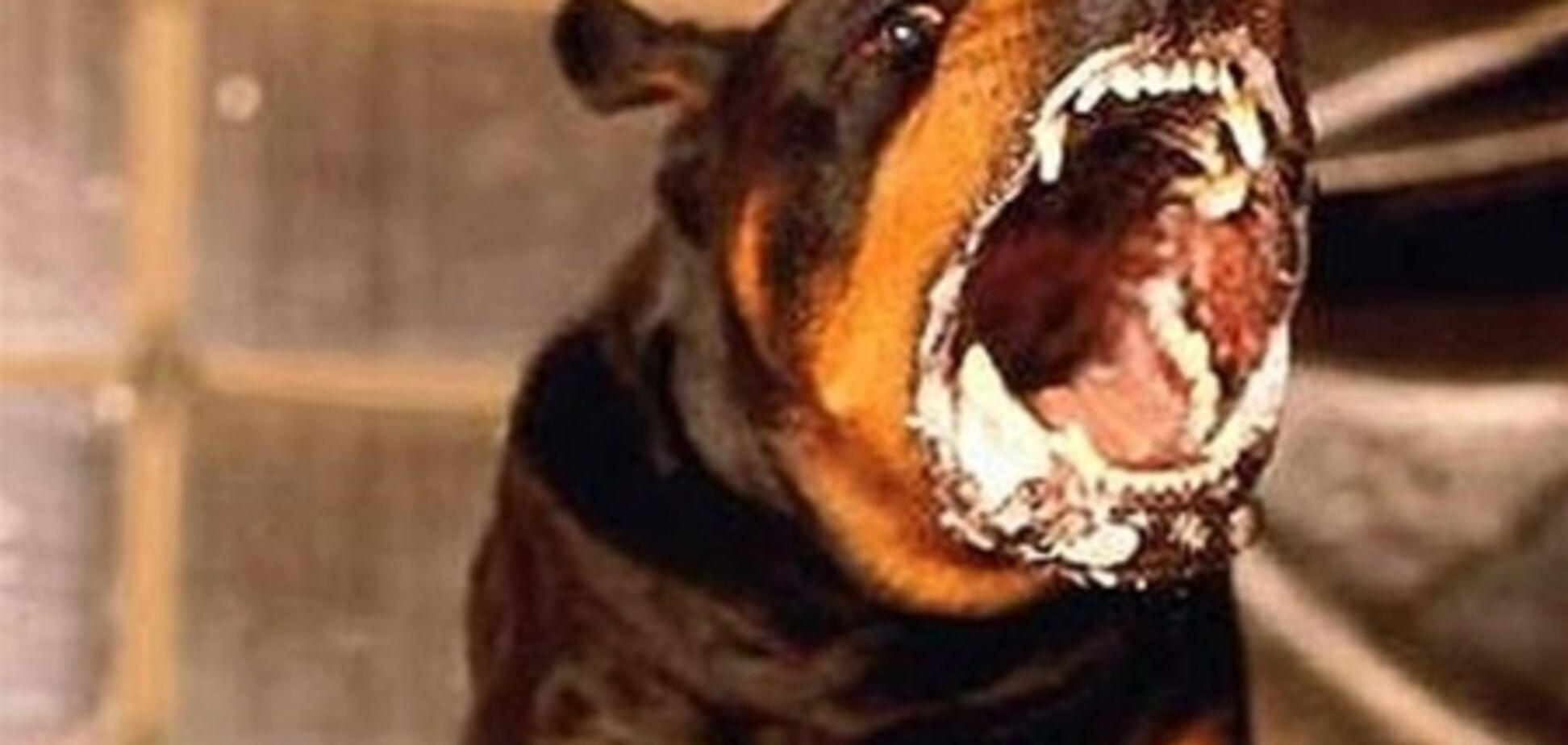 В Харькове собака покусала 4-летнего ребенка