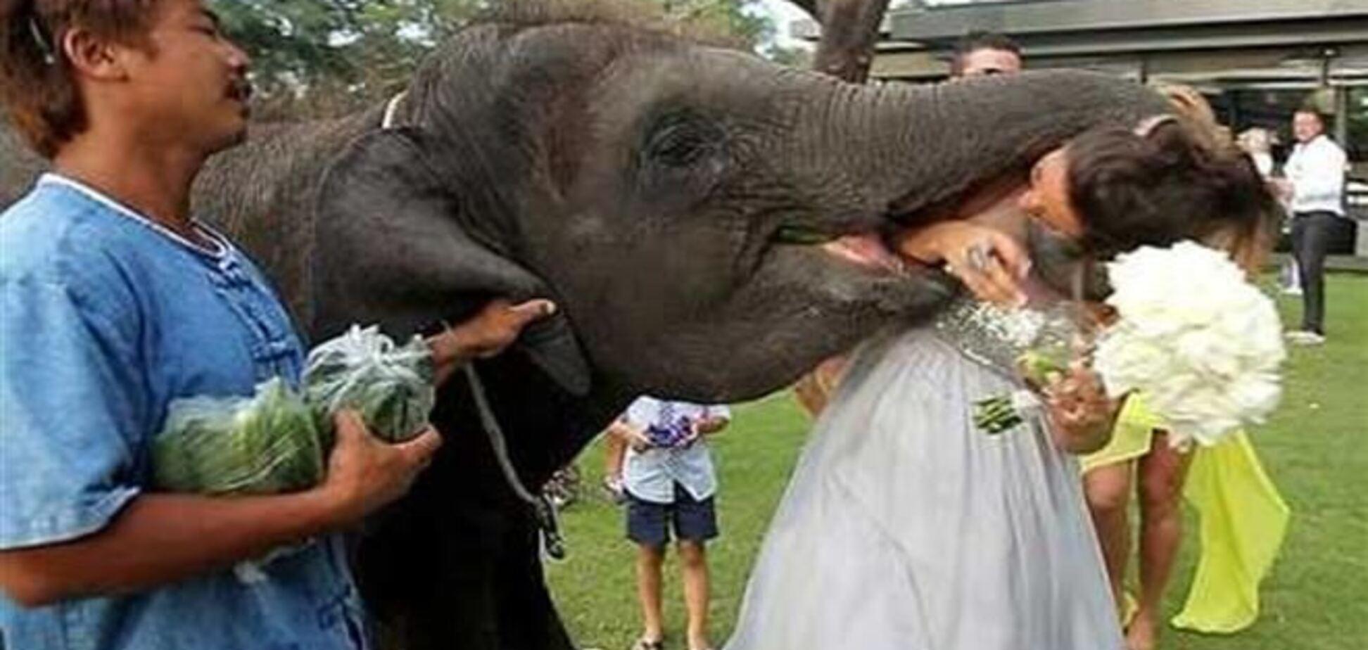 Курьез на свадьбе в Таиланде: слон едва не пообедал невестой