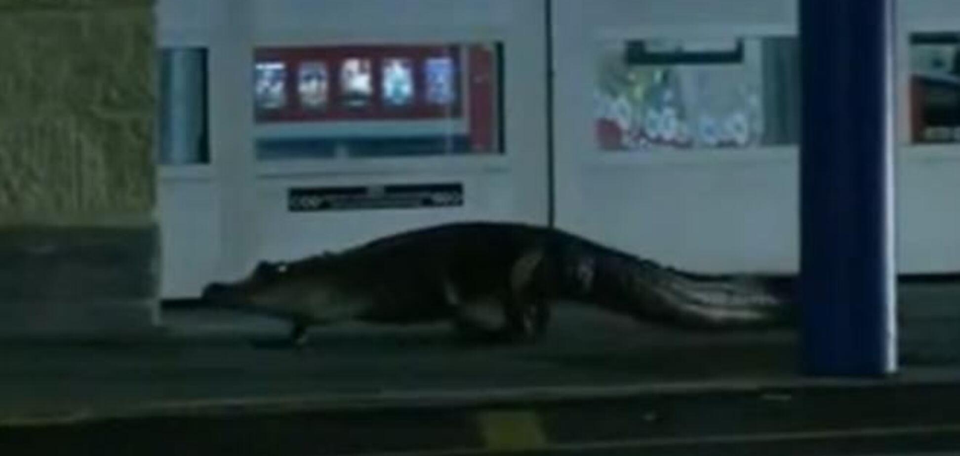 У США двометровий алігатор намагався заповзти в магазин