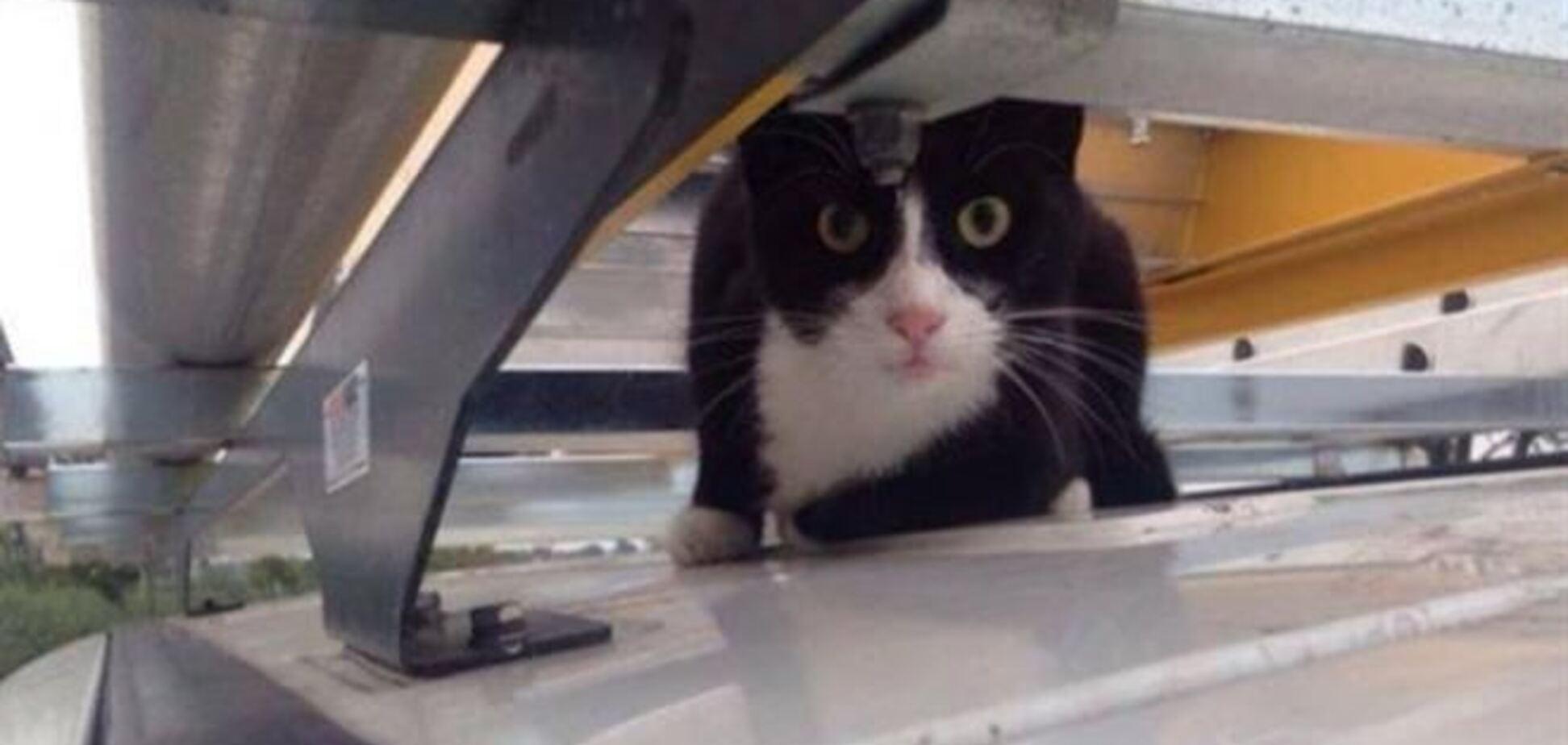 Кот проехался на крыше фургона со скоростью более 100 км/ч