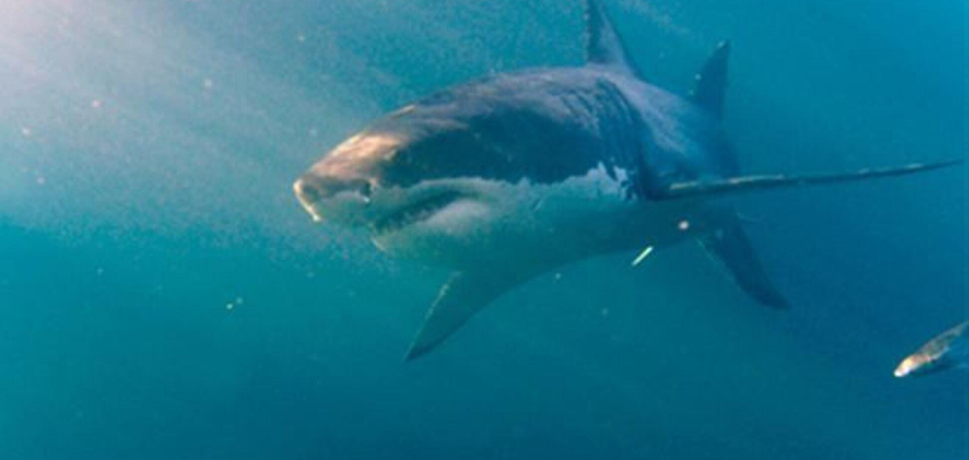 На Гаваях боксер побив напала на нього акулу
