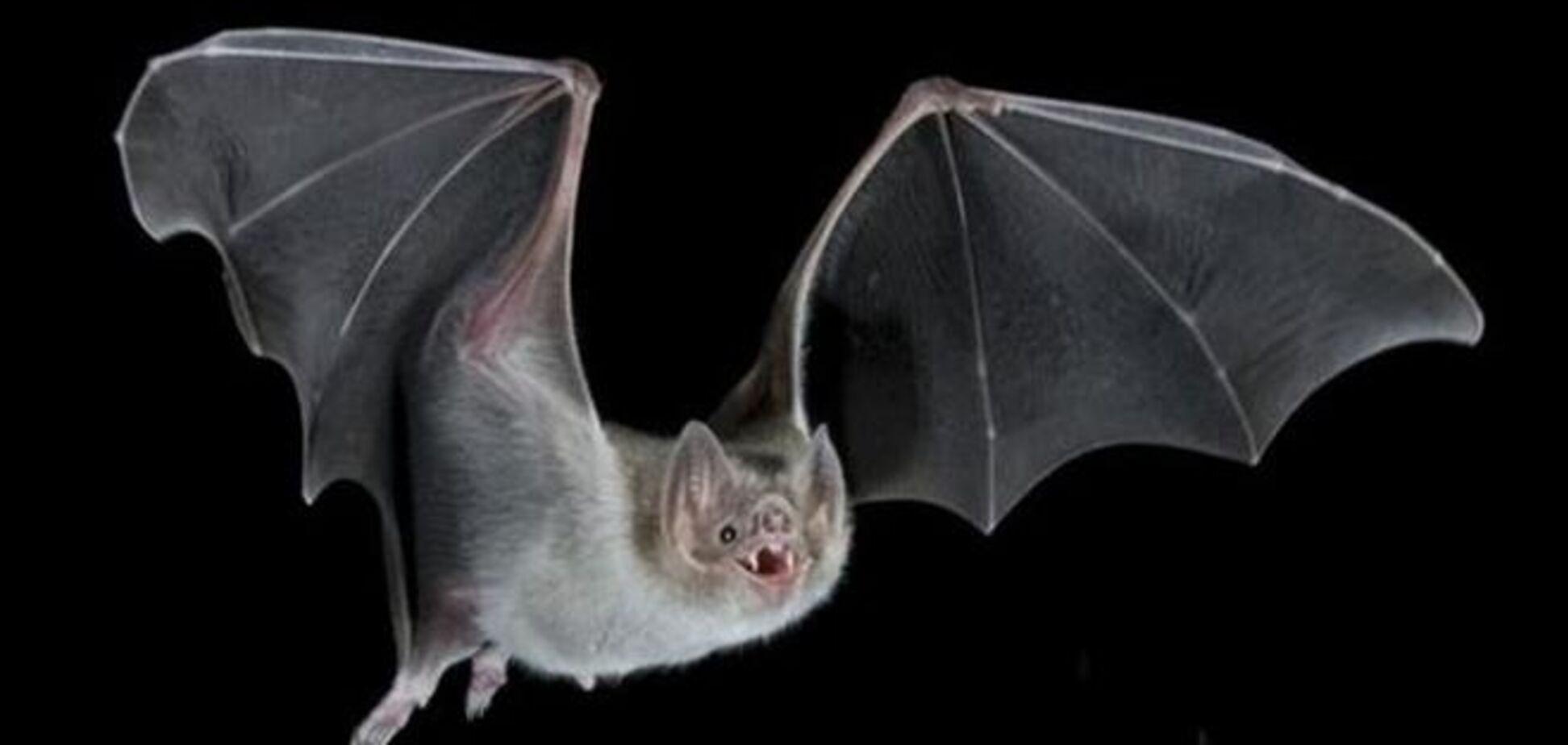 Летучие мыши оказались переносчиками атипичной пневмонии