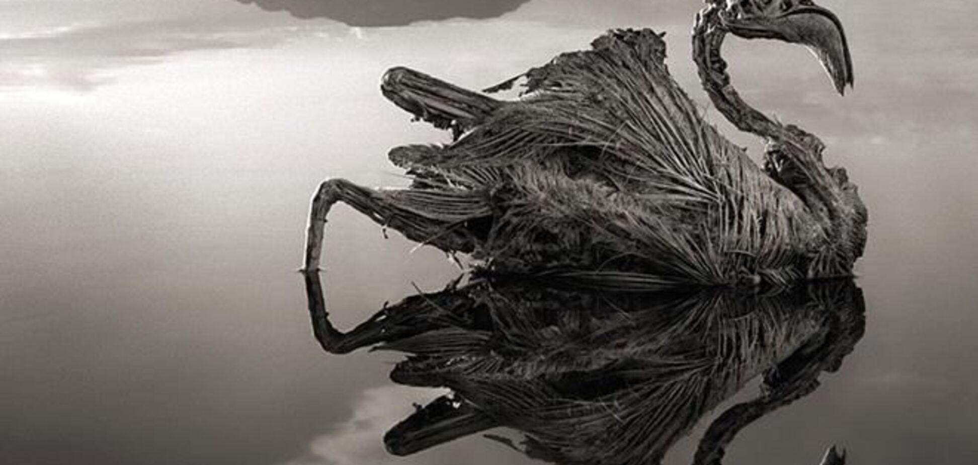 Найдено озеро, превращающее животных в камень