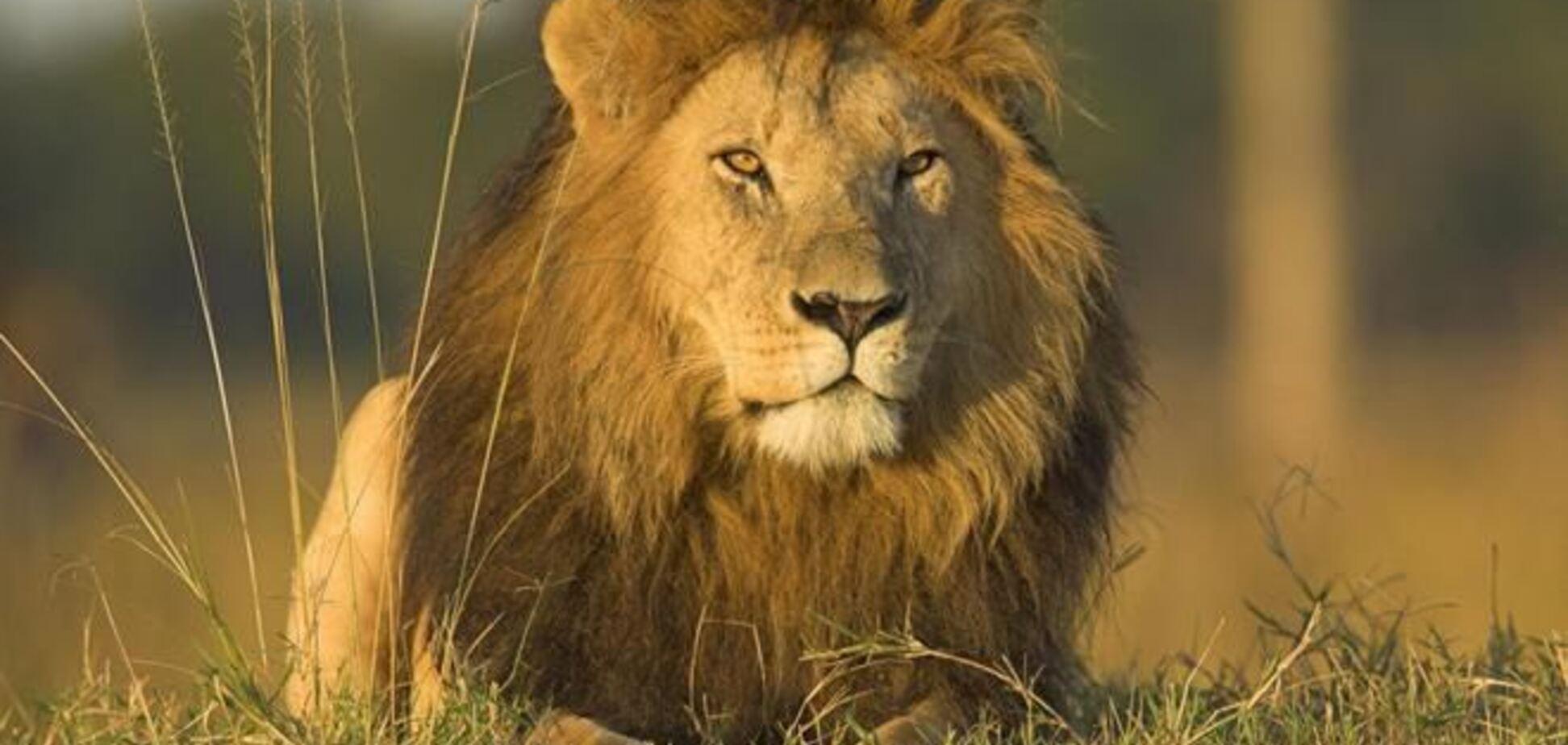 Открылся уникальный парк, где львов можно почесать за ушком