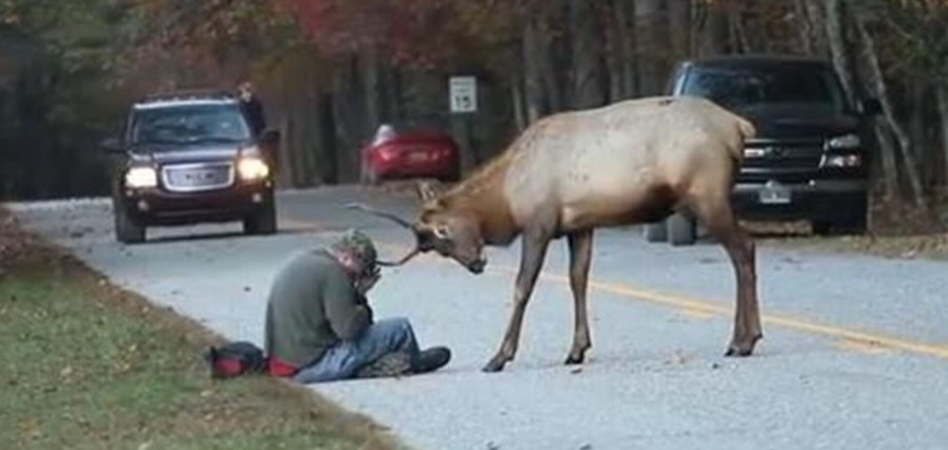 В США усыпили дружелюбного оленя, 'забодавшего' фотографа