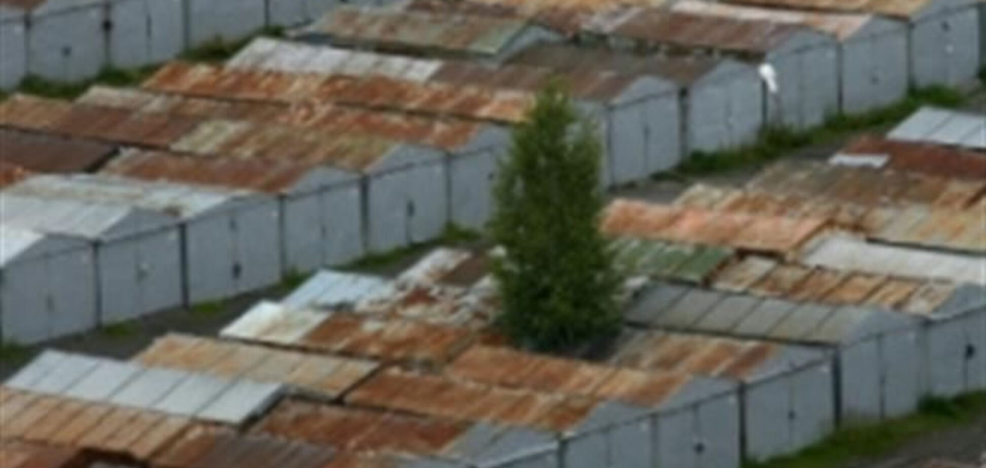 В Киеве загорелось дерево, а потом гаражи