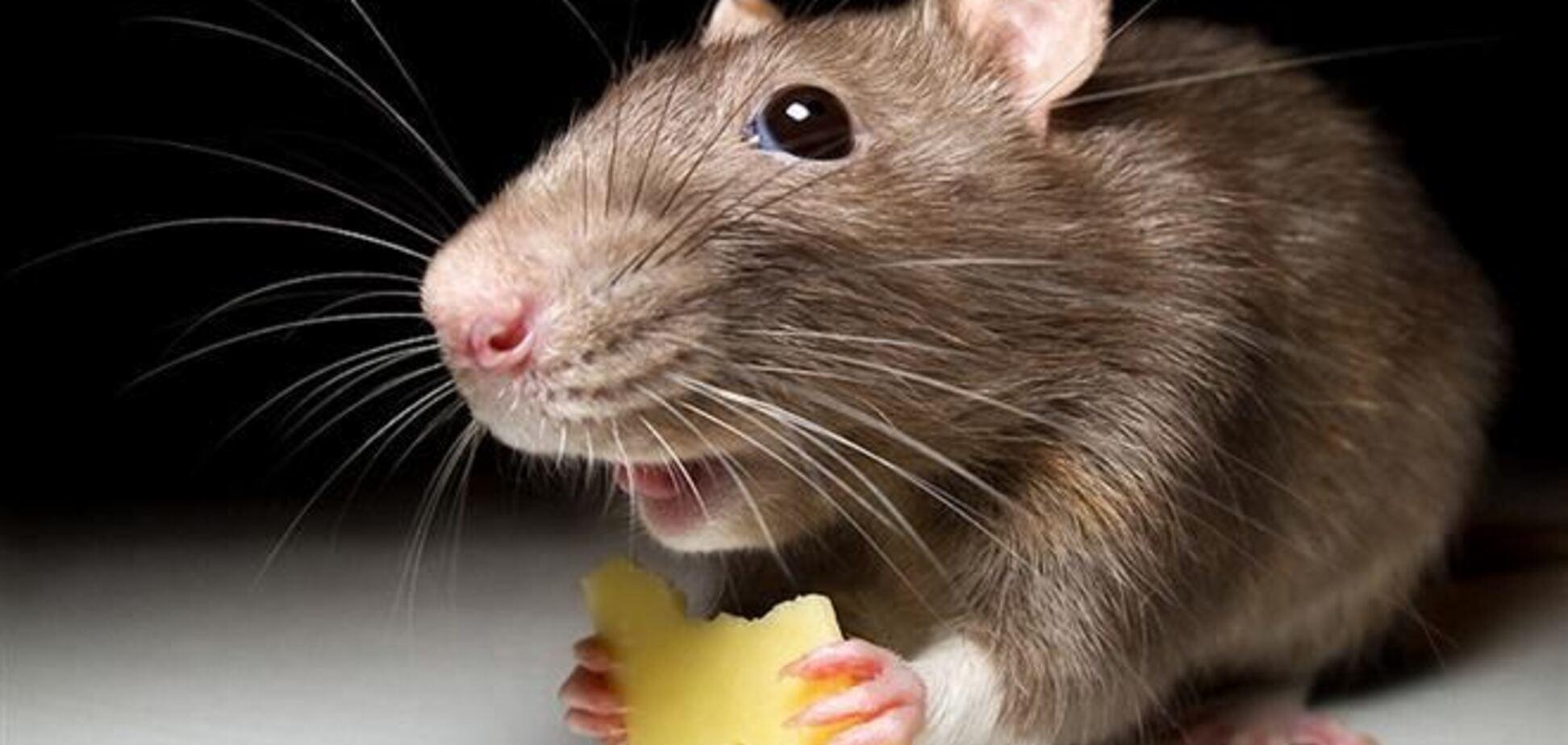 Мышь покорила Интернет своей настойчивостью
