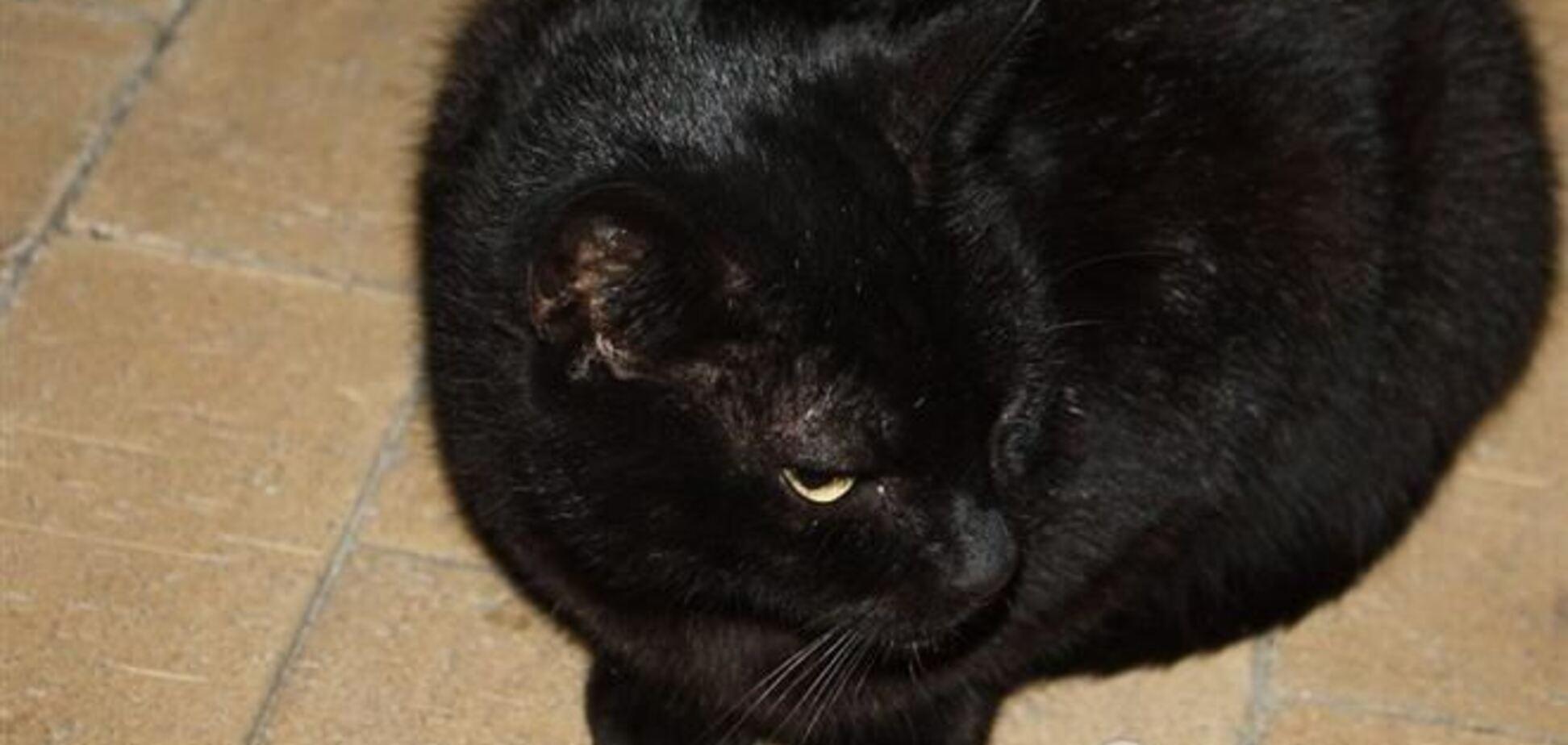 Суровый Челябинск готовится к параду черных котов