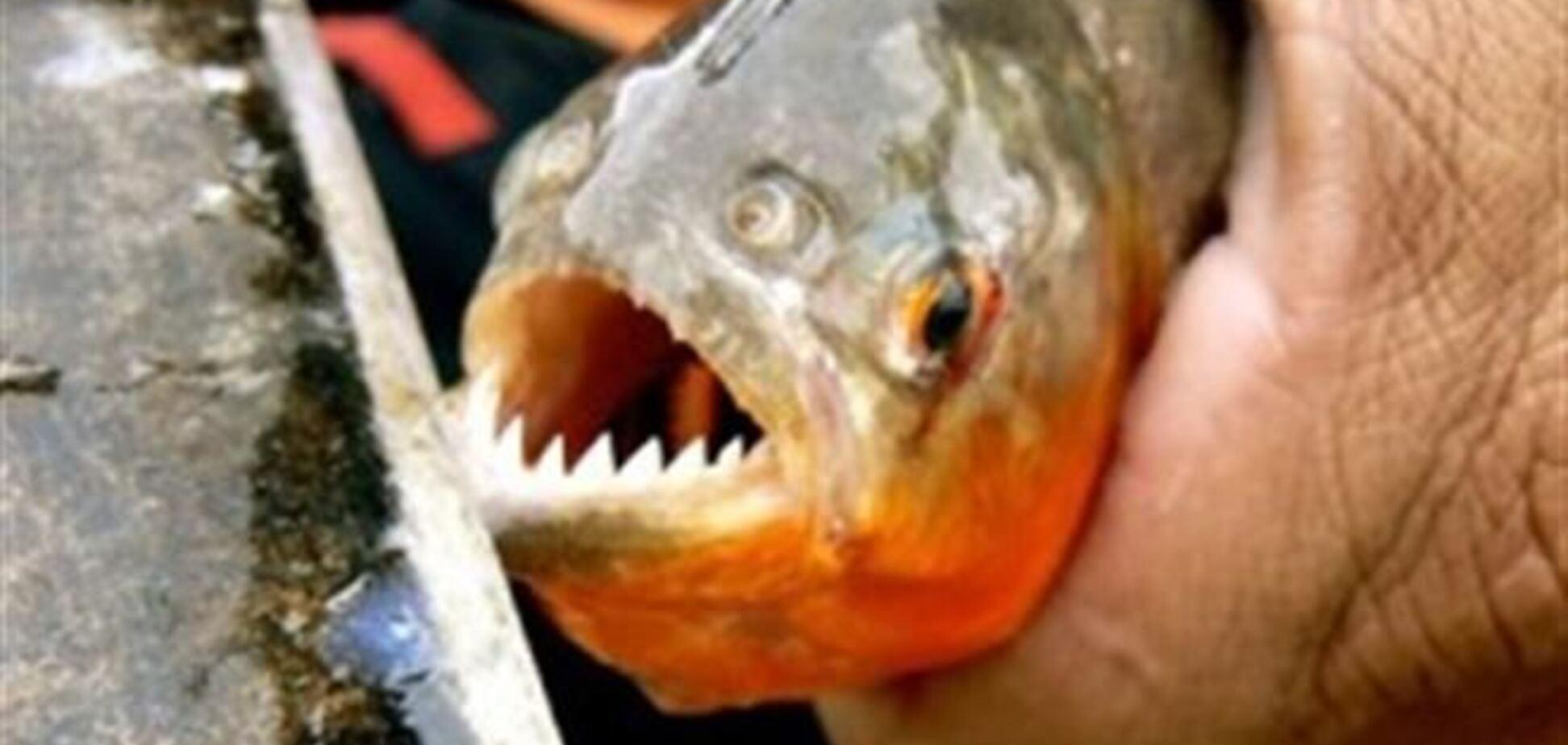 Полсотни аргентинцев искусали хищные рыбы