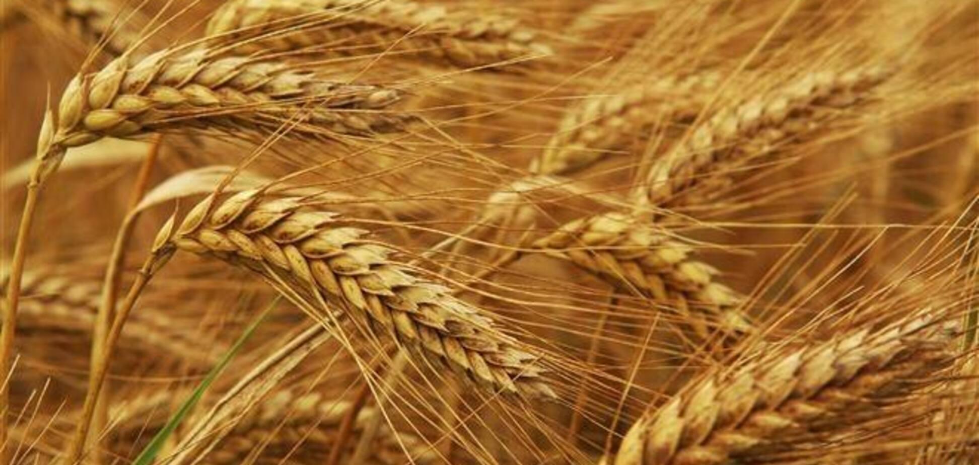 Из-за 'заморозки' евроинтеграции пострадает зерновое направление - эксперт