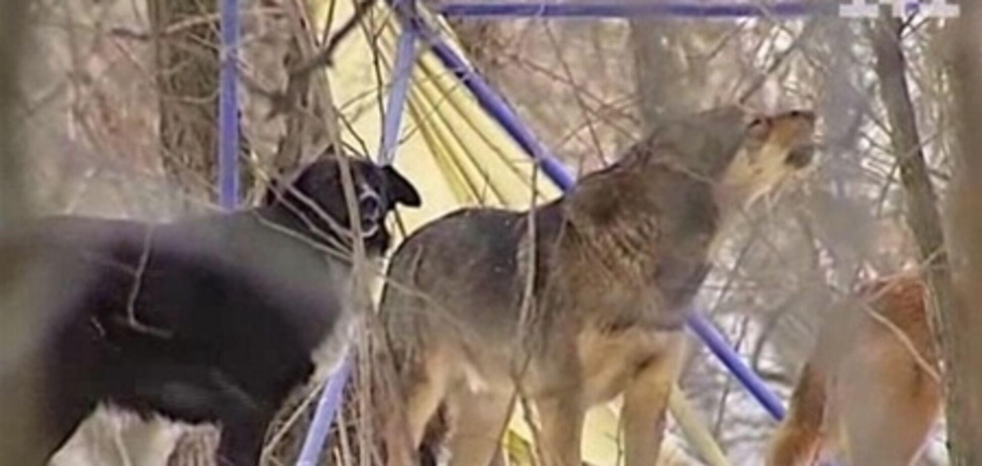 В Гидропарке массово травят собак