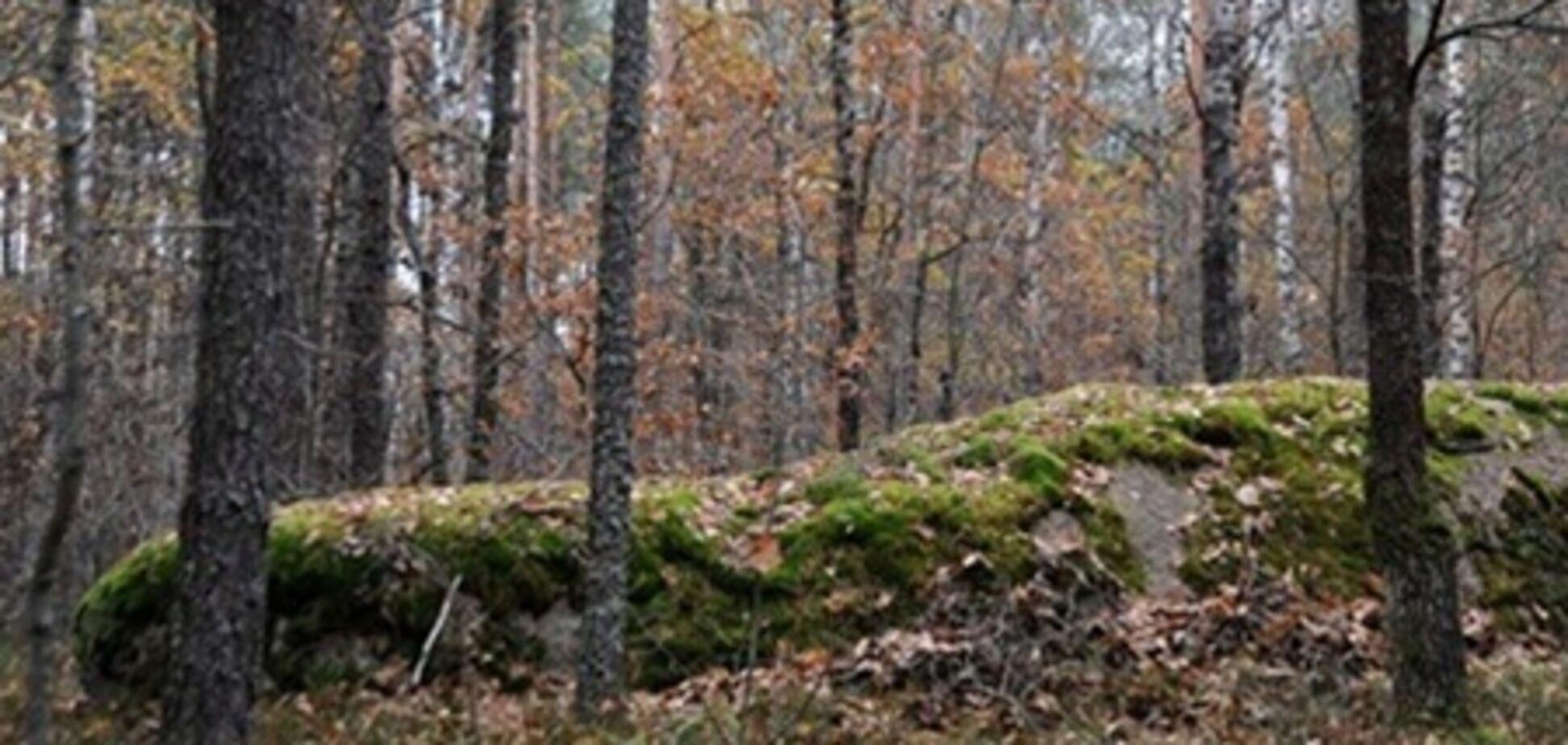 Более 500 га Беличанского леса требуют вернуть государству