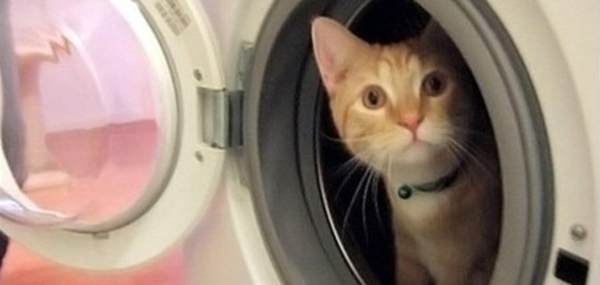 На Дніпропетровщині кота випрали у пральній машині