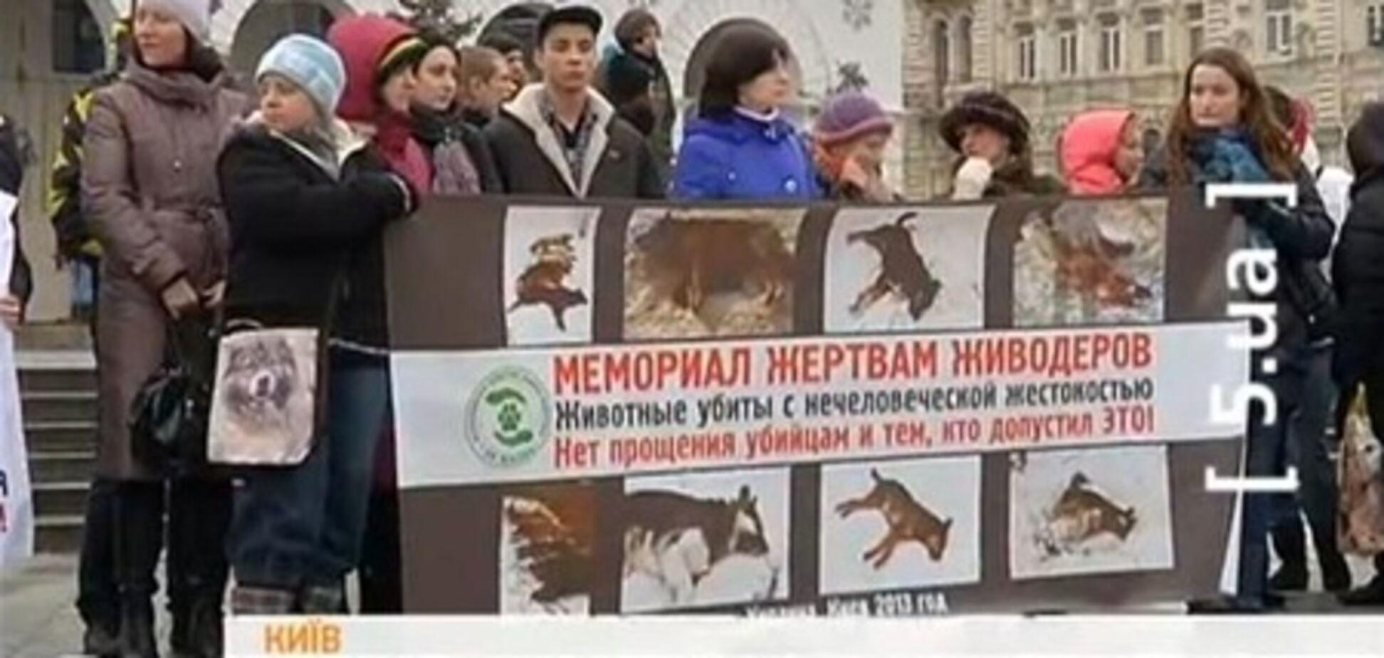 Киевляне требуют наказать догхантеров