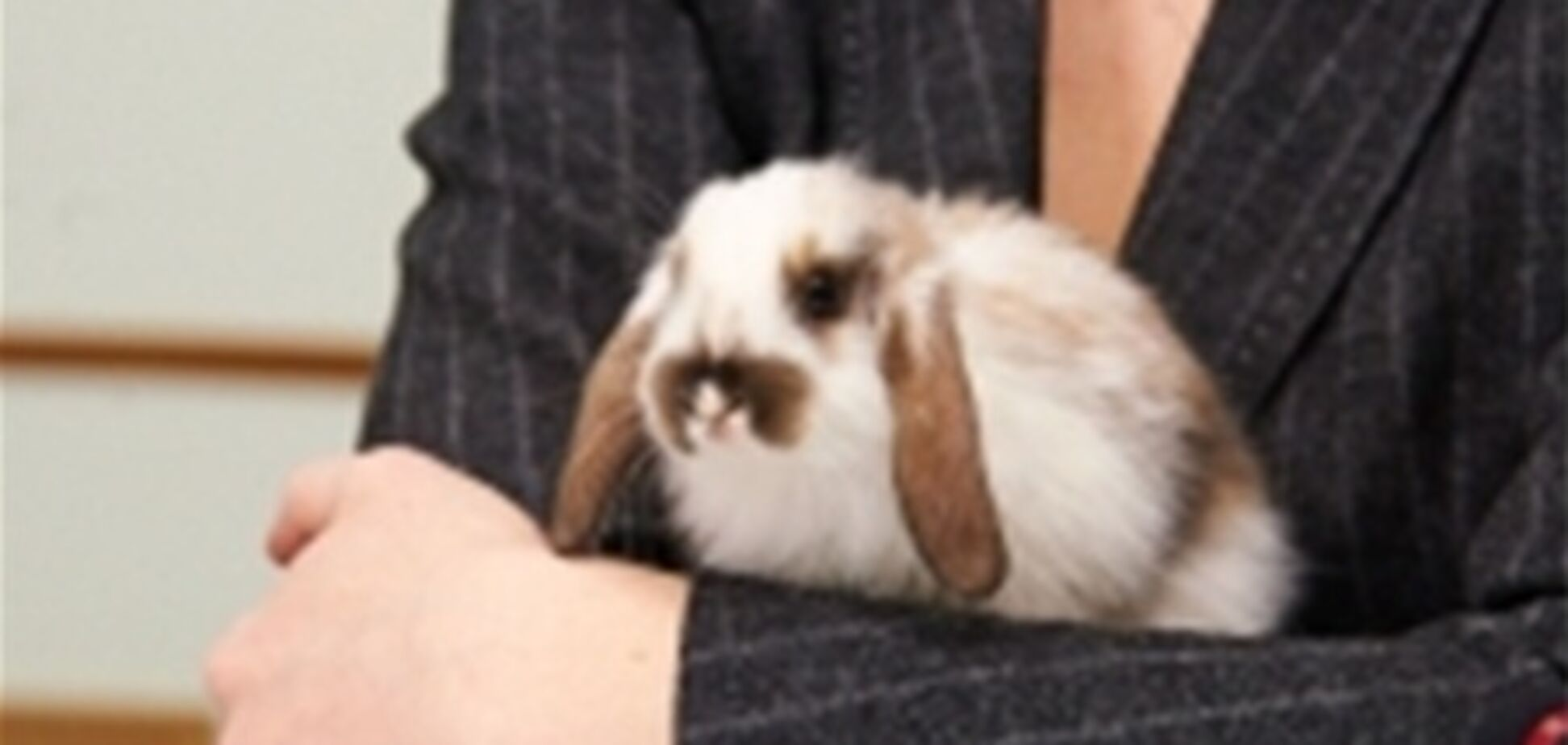 В Харькове выберут самого быстрого кролика