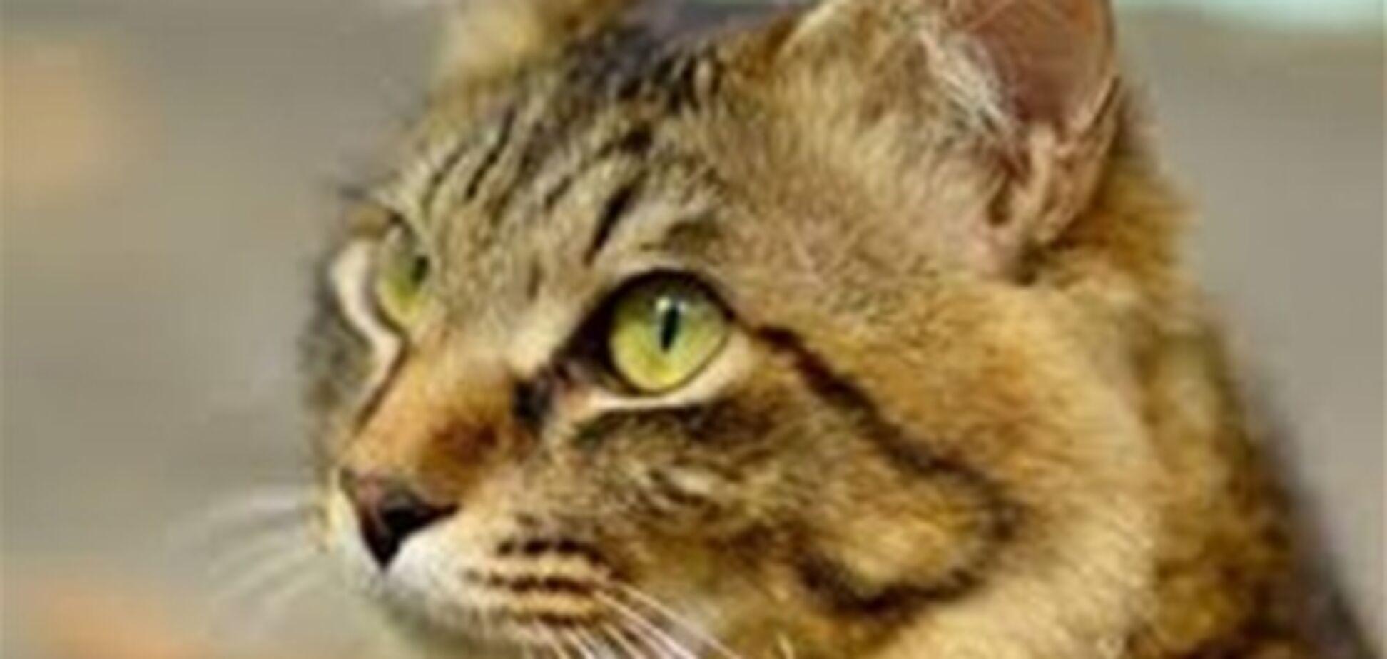 Россиянин убил пенсионера из-за кошки
