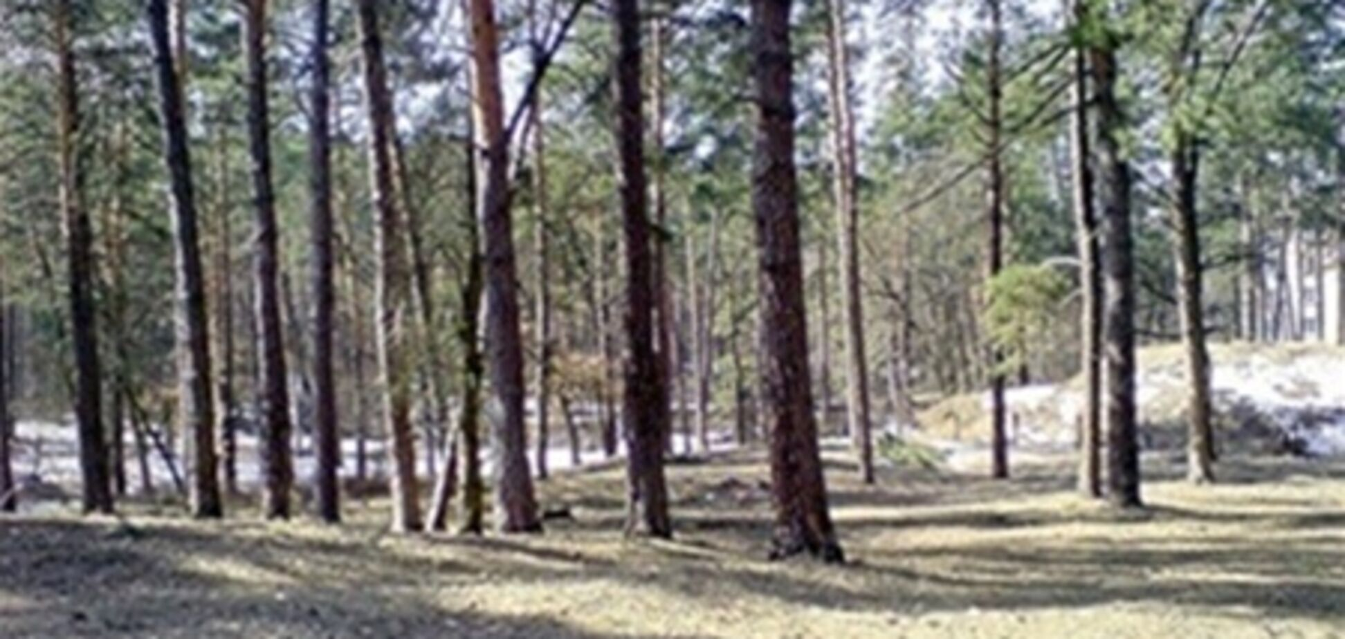 Беличанский лес требуют вернуть государству