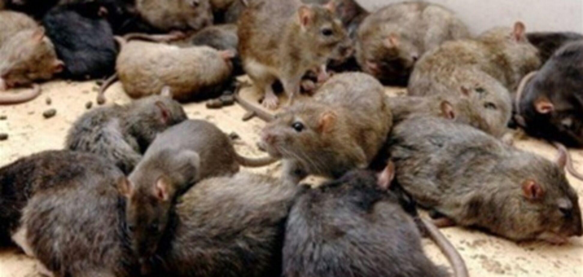Партнер советника Кернеса 'наварил' на убийстве крыс 3 млн