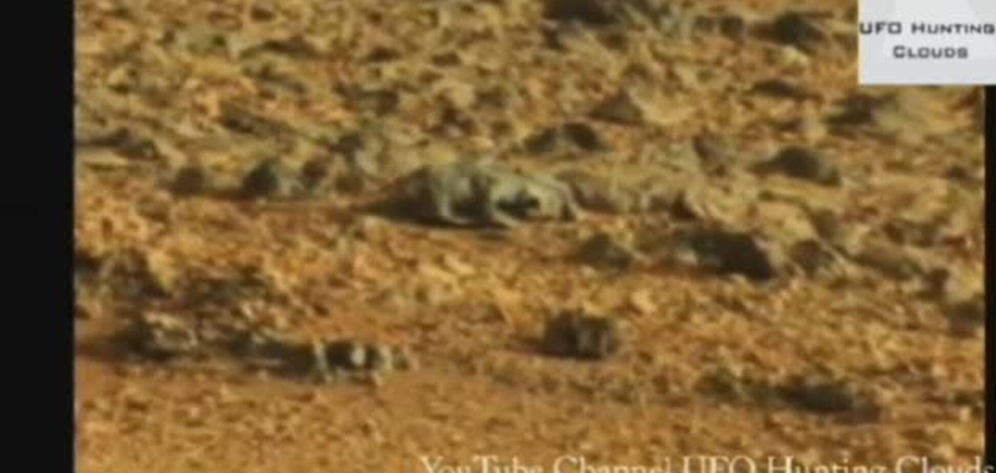 На Марсе заметили ящерицу