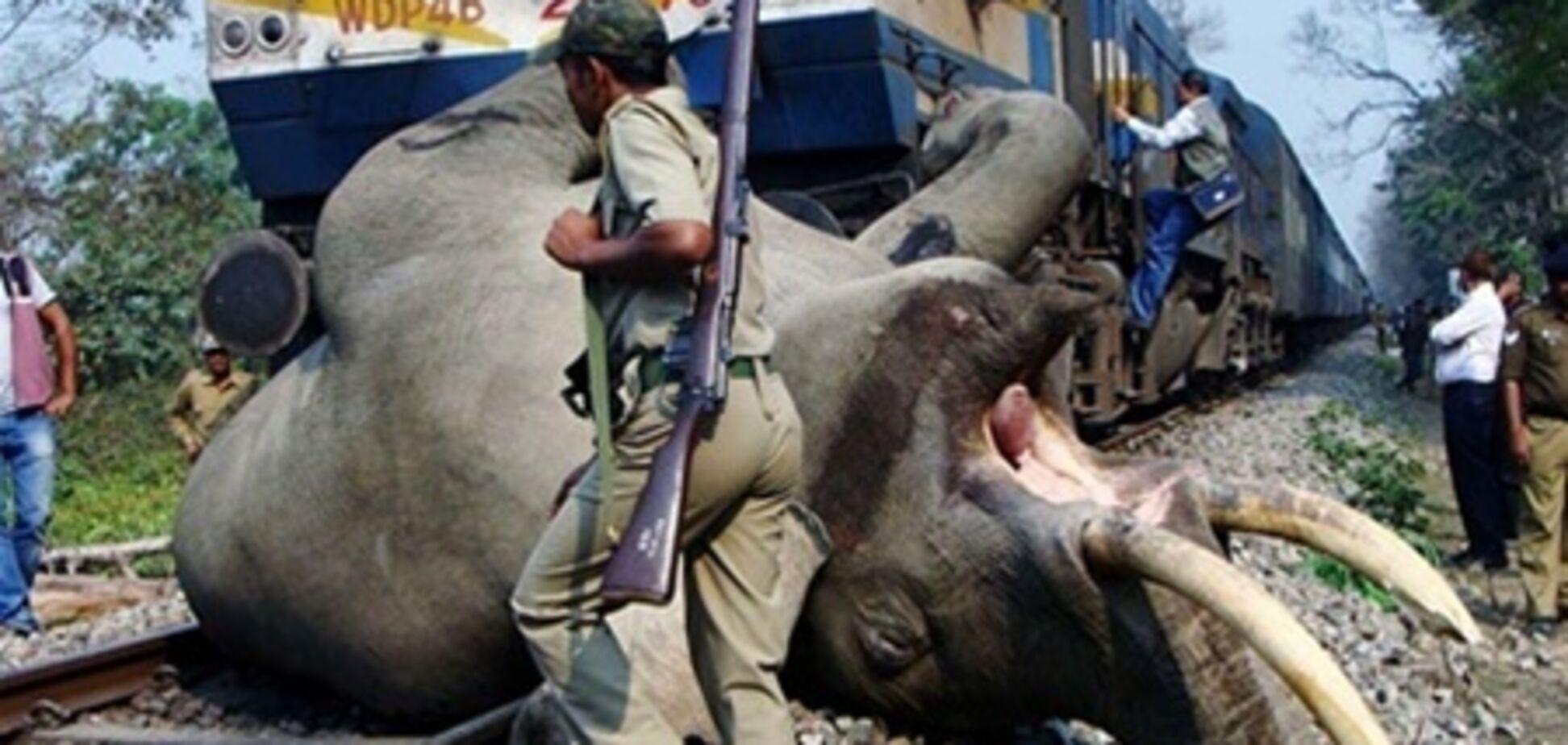 В Индии поезд насмерть сбил трех слонов