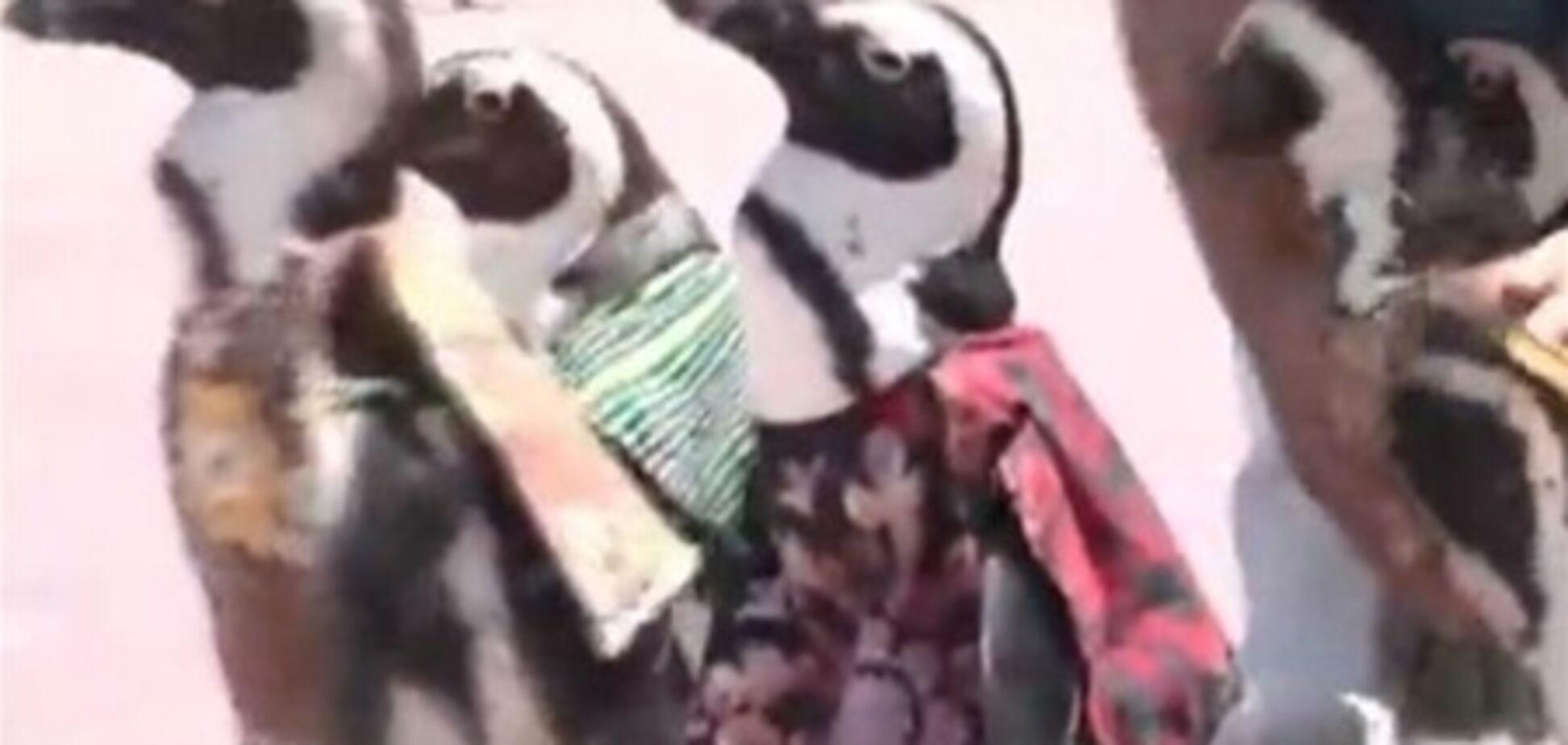 Пінгвіни в африканських костюмах зустріли лідерів Африки в Японії