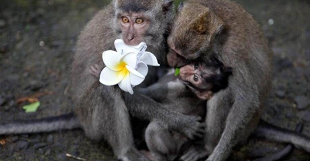 родившиеся под картинки двух обезьян смешные значит, что наркоманы
