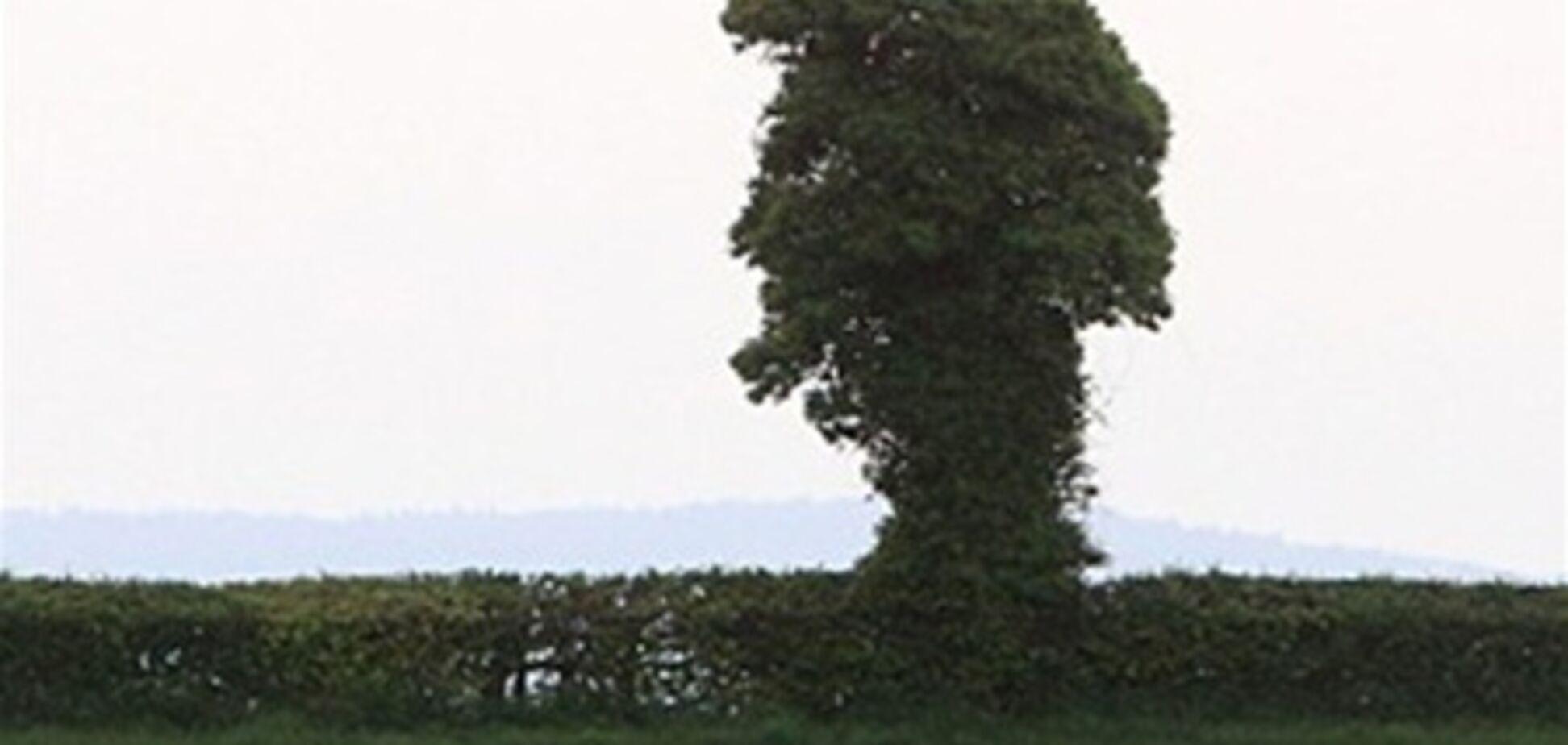 В Англії знайшли дерево-Елвіс