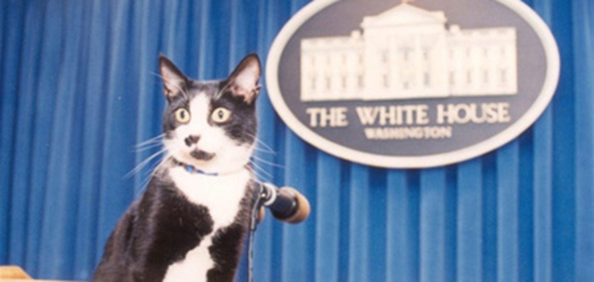 Кішки президентів і прем'єр-міністрів