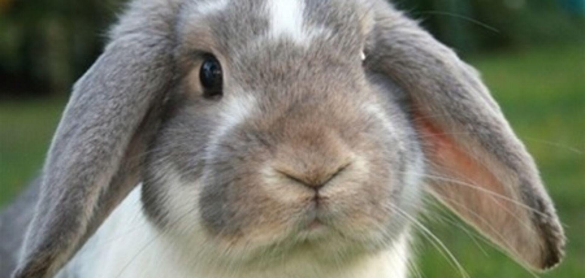 Ролик про купання кролика в раковині підірвав Інтернет