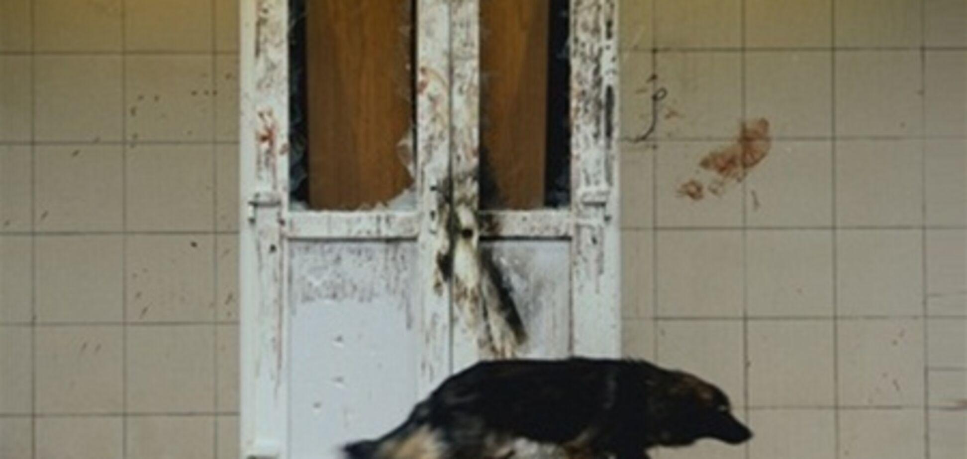 З Врадіївський міліціонерів свідчення вибивають силою - ЗМІ
