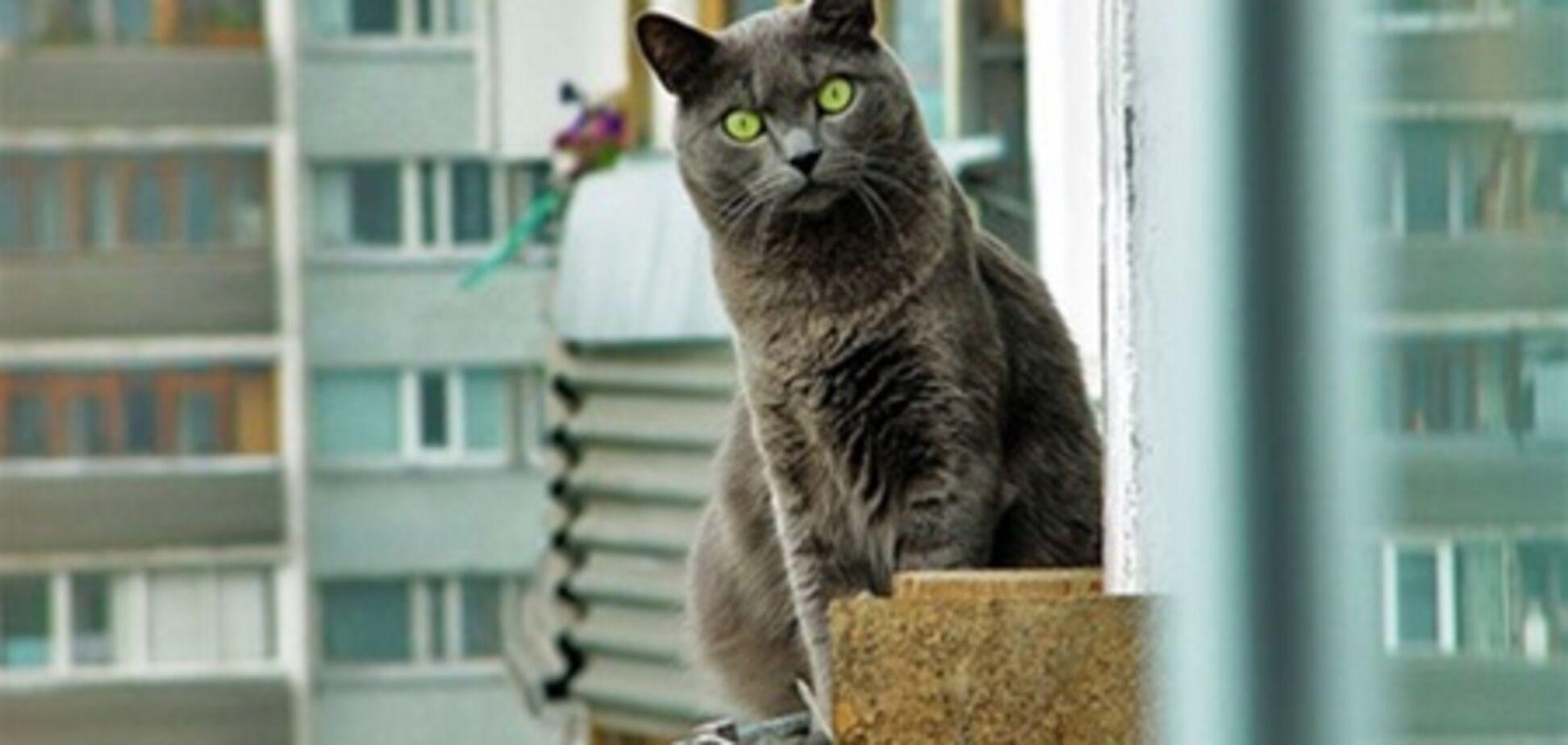На Луганщині трьохлітка випав з вікна, граючи з кішкою