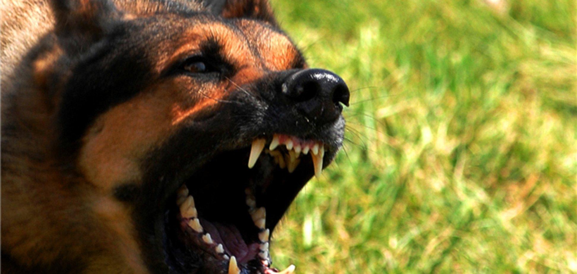 Собаку, що покусав господиню на Рівненщині, закололи вилами