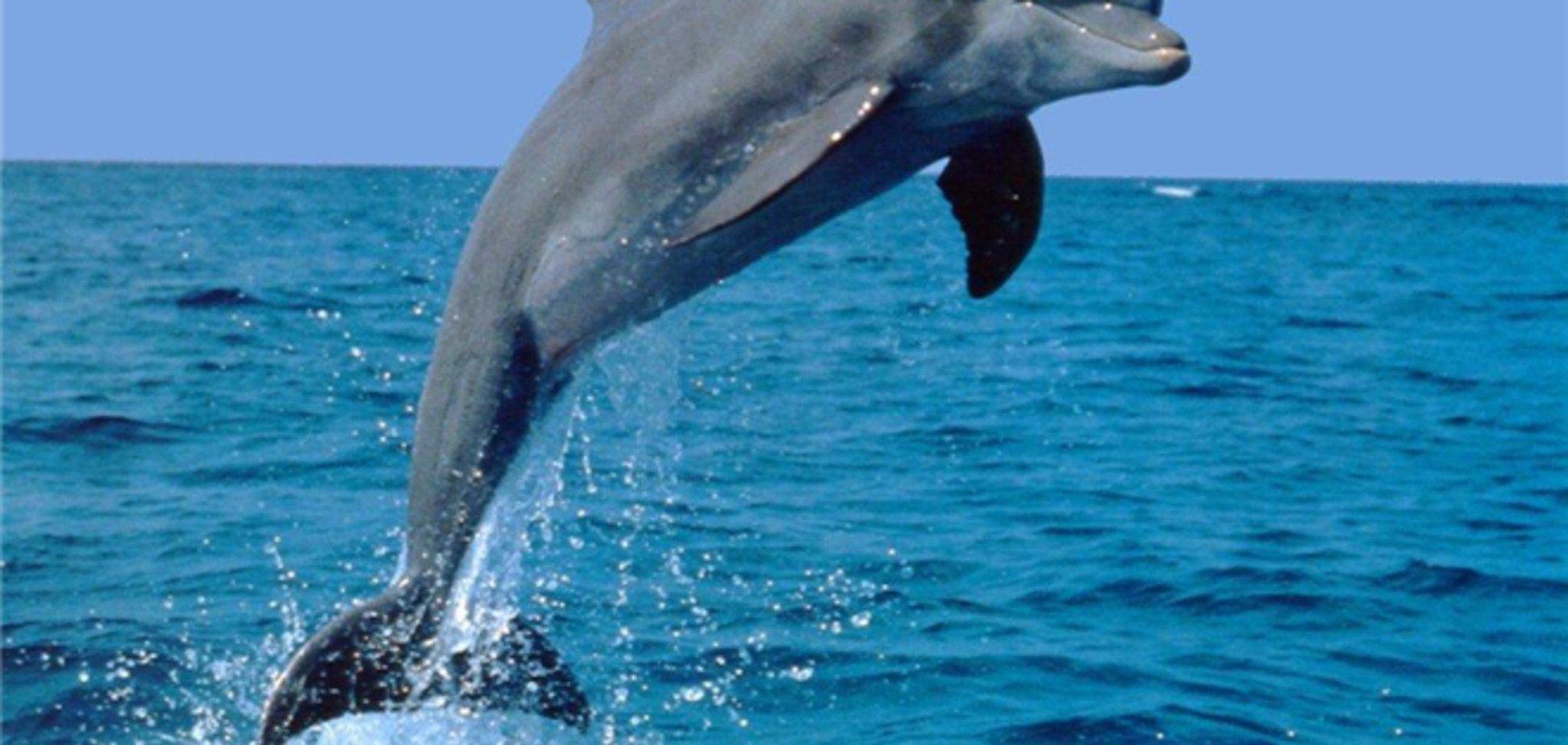 В Крыму работники пансионата убили дельфина