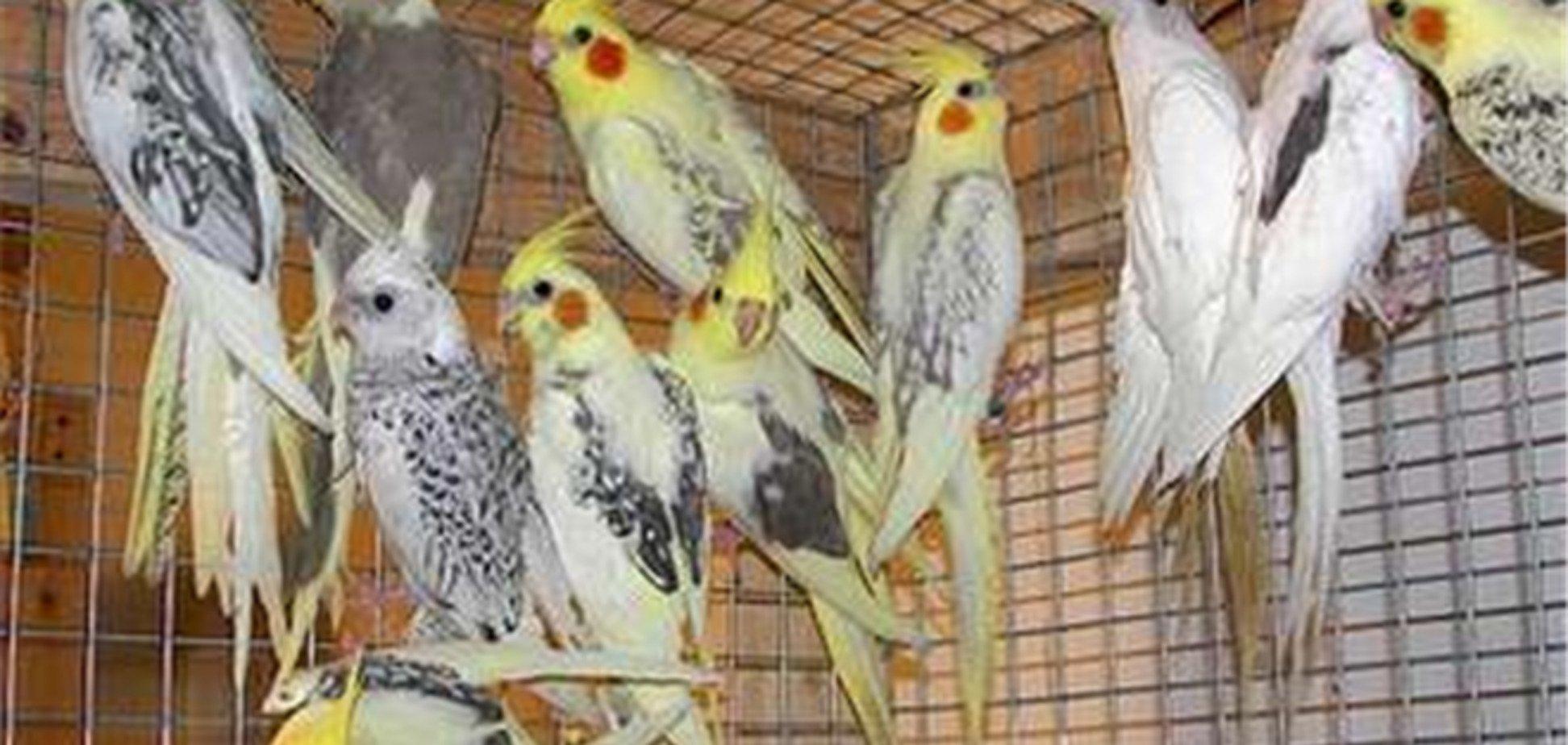 На Сумщині п'яного злодія покусали 60 декоративних птахів