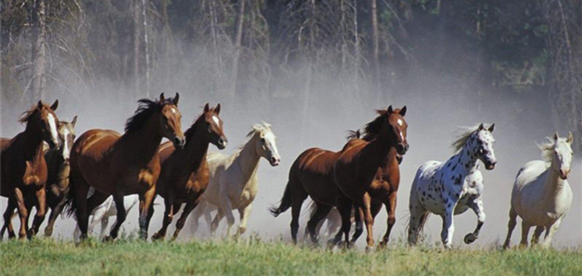 На Львівщині чоловік розстріляв табун коней