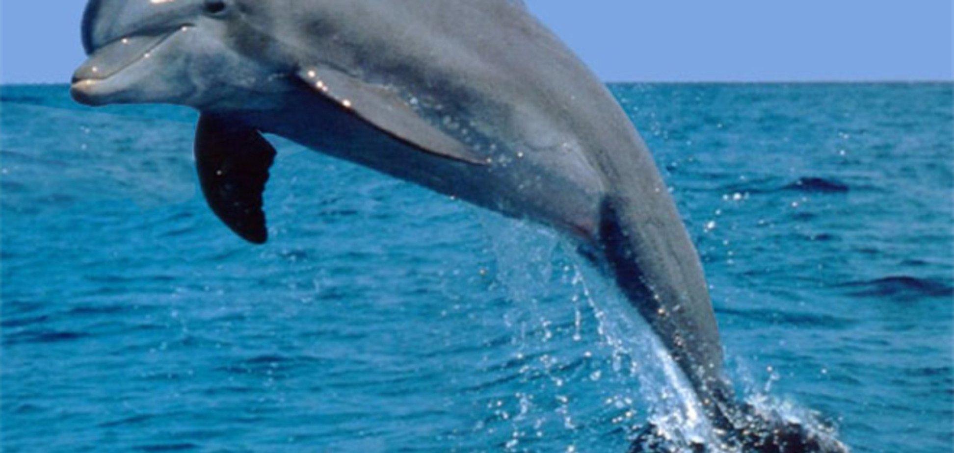 Скандал з дельфіном в Криму: сільрада повідомили, що тварина була мертвим