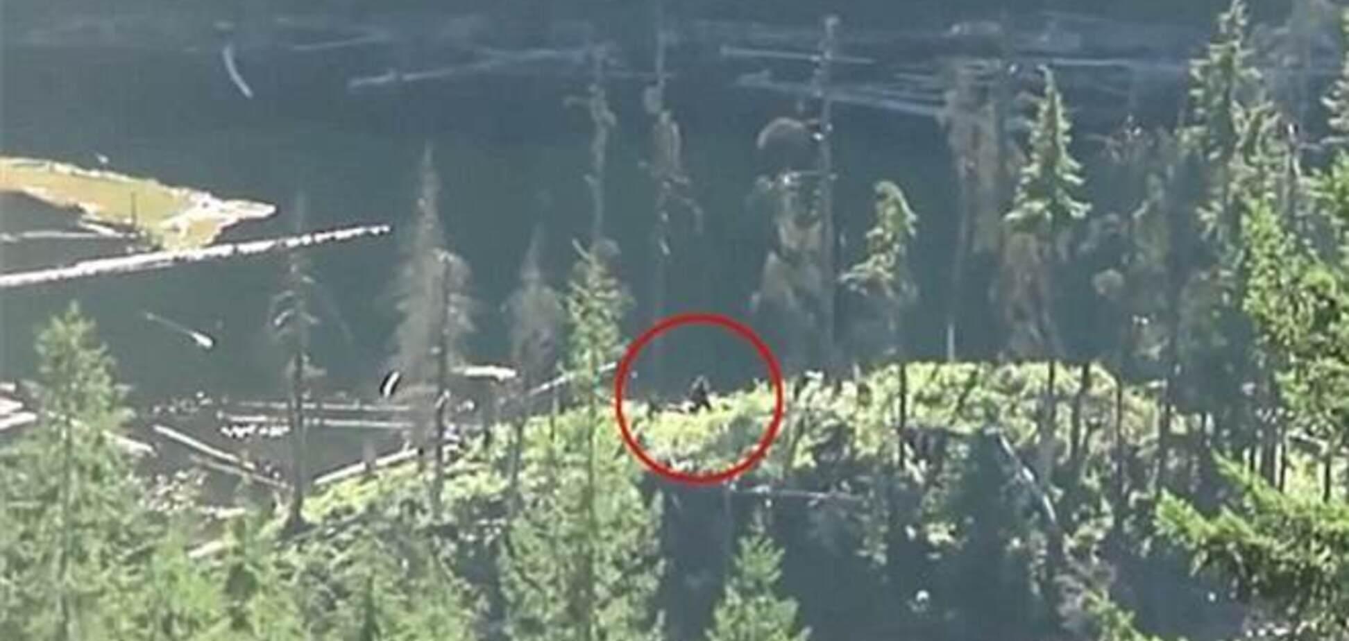 Туристы сняли снежного человека в лесах Канады
