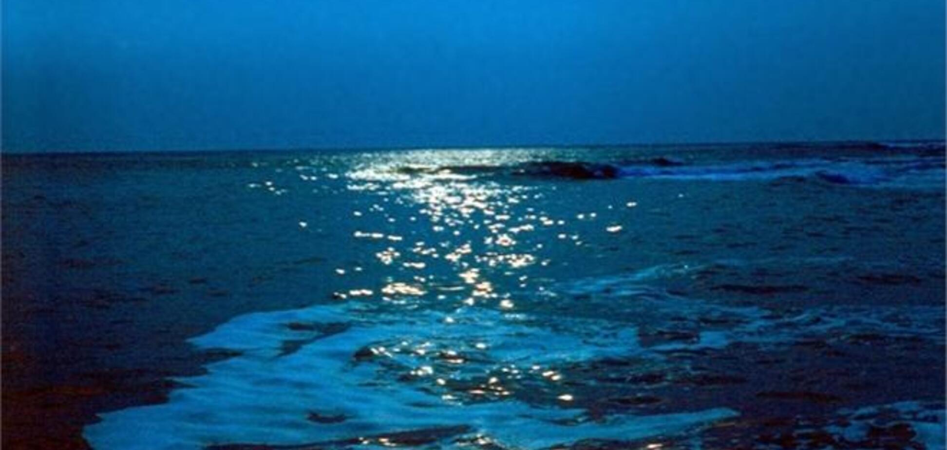 У Чорне море на Одещині вилили 300 л пальмового масла