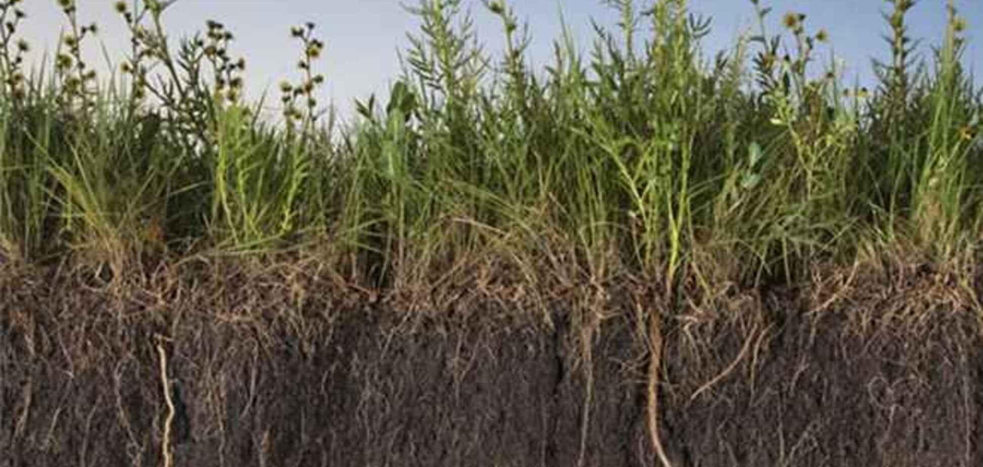 Депутат предлагает поднять аренду сельхозземель
