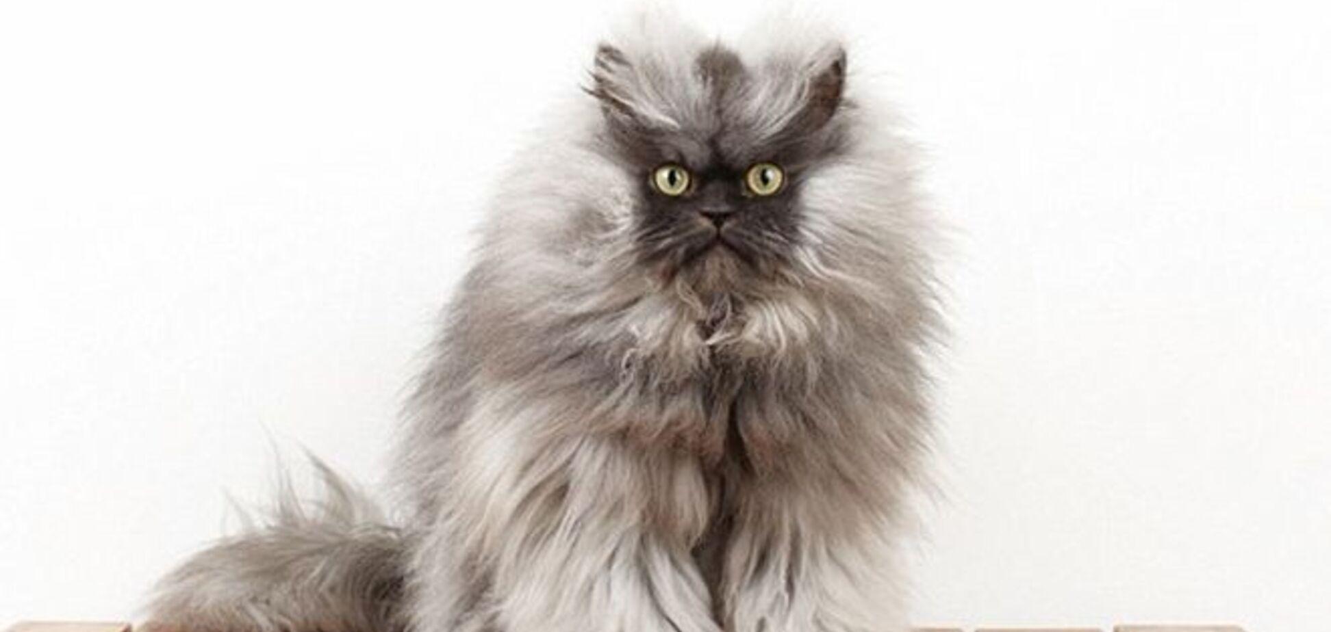 Найден самый пушистый в мире кот