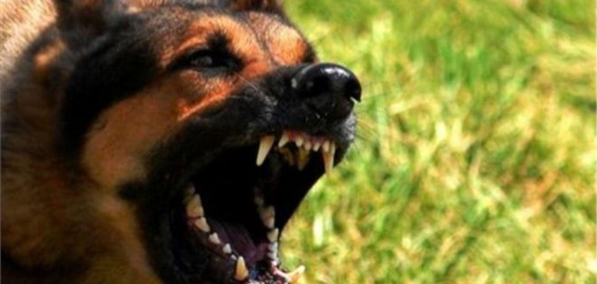 На Черкащині господар собаки, що загриз 5-річного хлопчика, отримав умовний термін