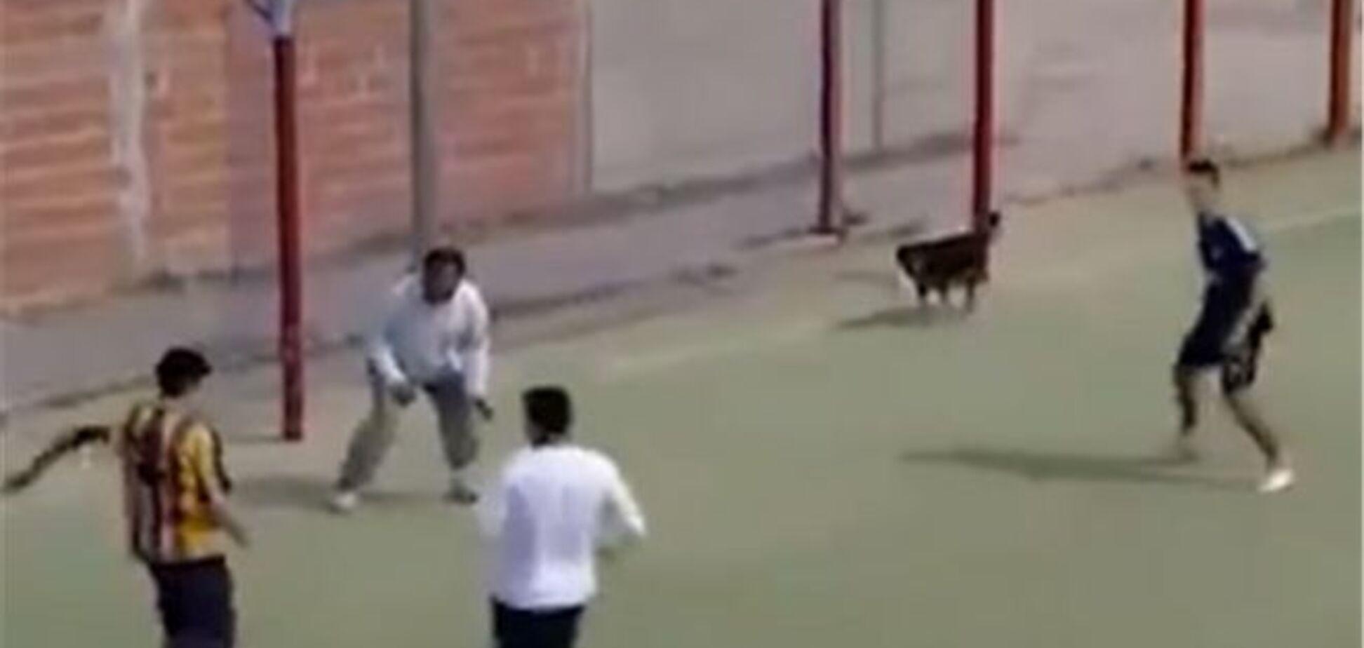 Собака забила гол на футбольному матчі