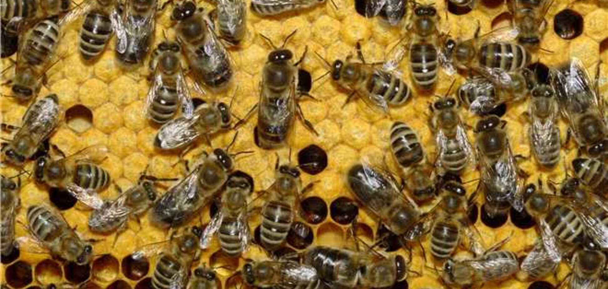 Бджоли закусали до смерті жителя Вінницької області