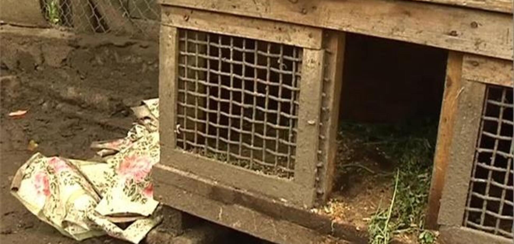 В Бердичеве чупакабра перепрыгнула через 2-метровый забор и убила кроликов
