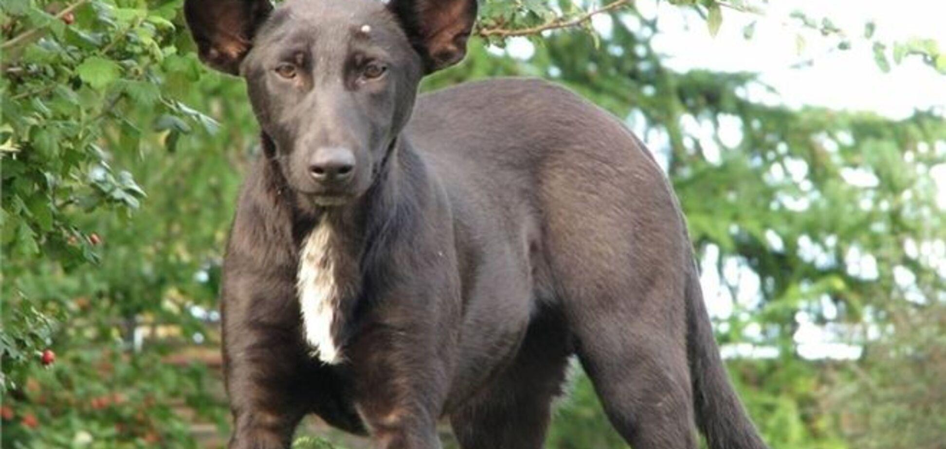 На Хрещатику знайшли собаку, схожу на Путіна